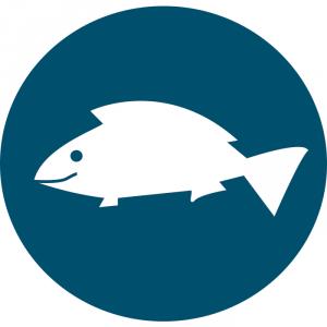 Stage pêche – Multi-activités
