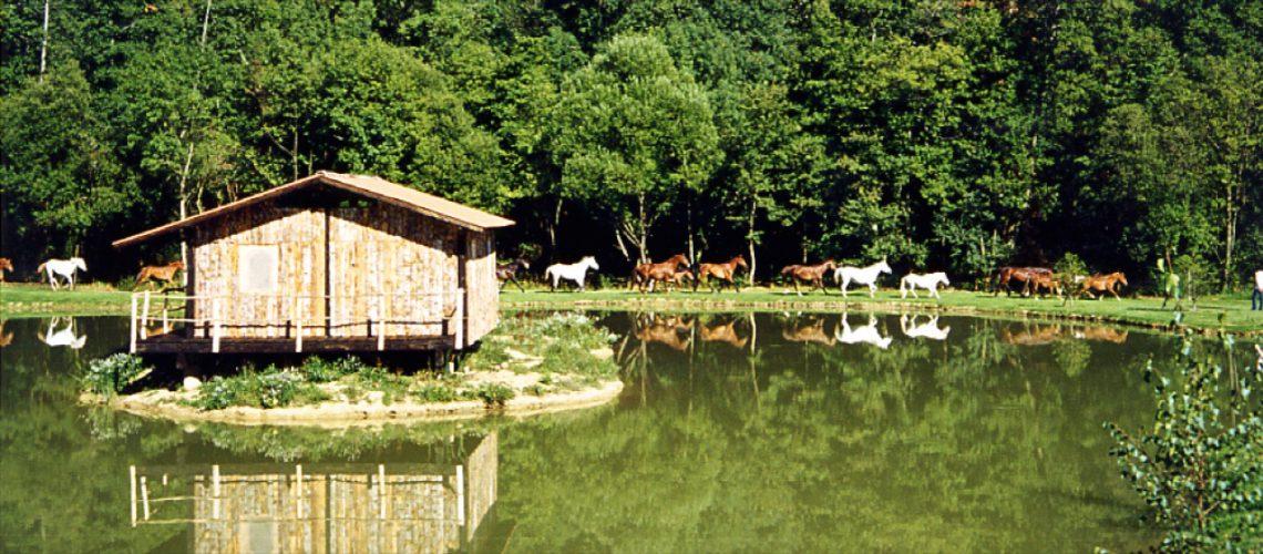 L'équitation en pleine nature