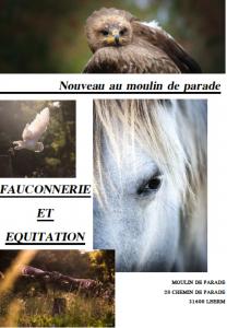 Nouveauté : Journée Fauconnerie