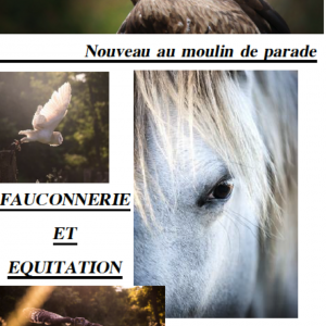 image-fauconnerie