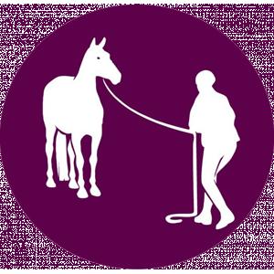 Stage Equitation Ethologique